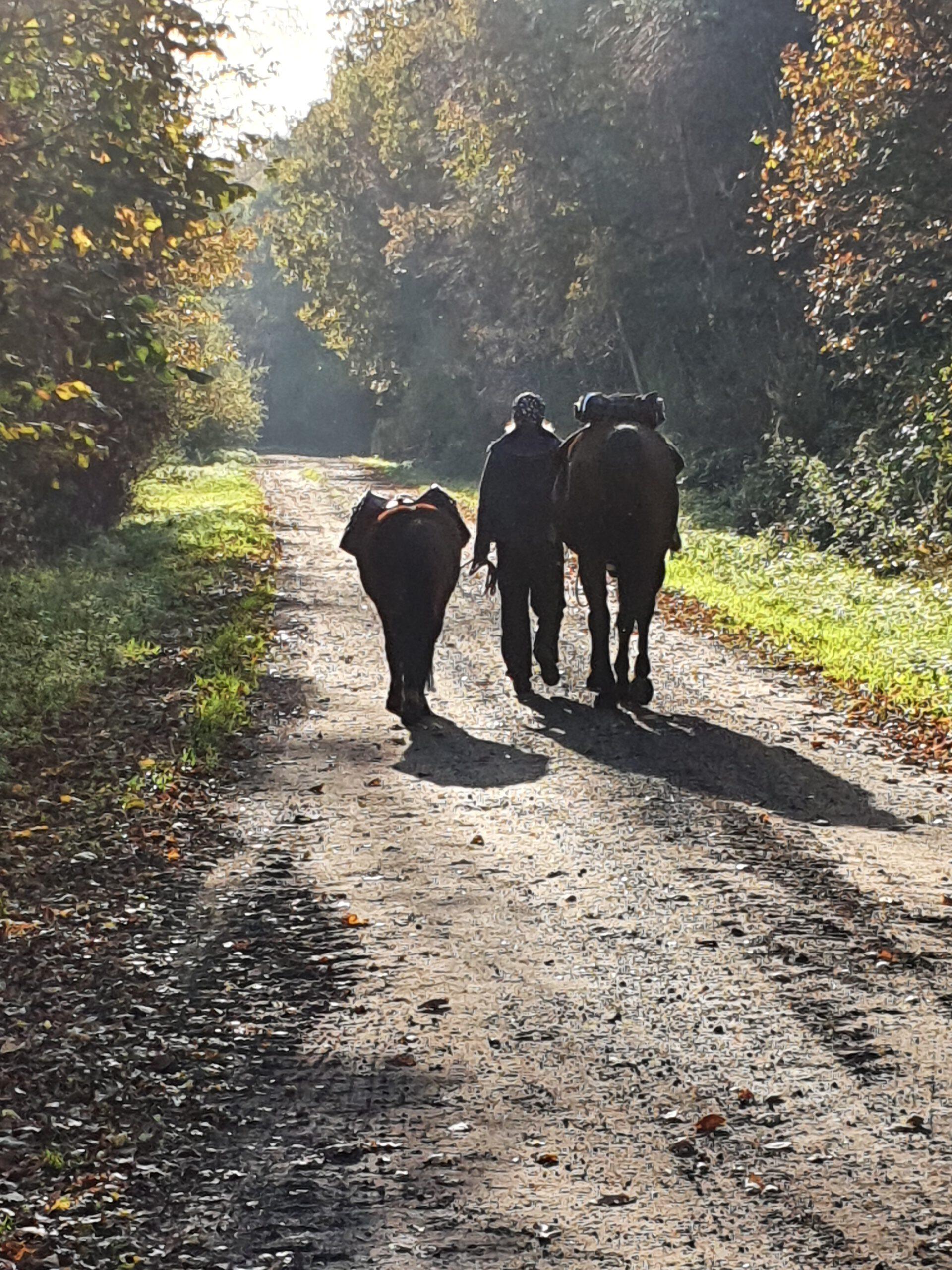 Mit Packpferden unterwegs