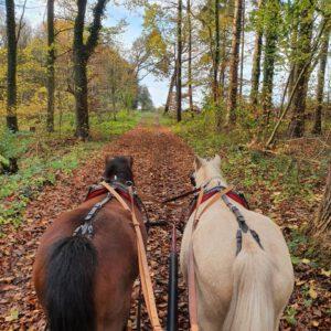 Herbstausfahrt mit Sonne und Bär